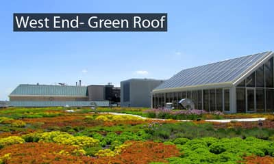 West-End-Green-Roof