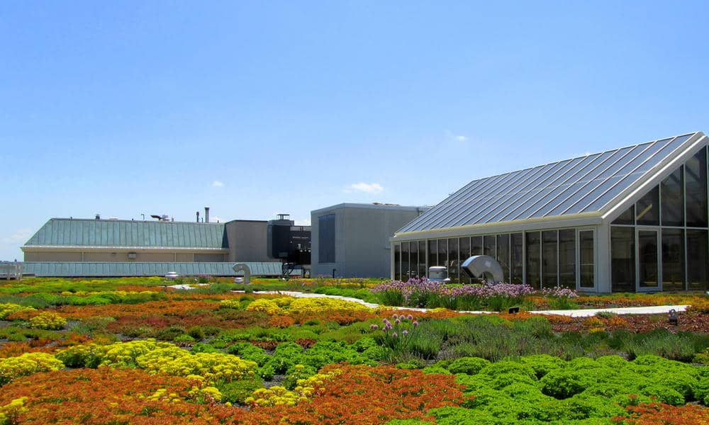 West-End-Green-Roof-1-1.jpg