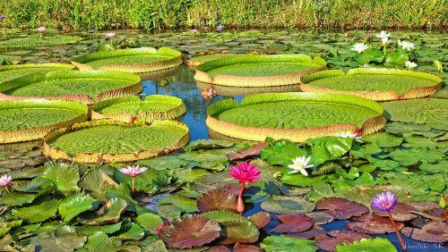 kenilworth gardens.ed